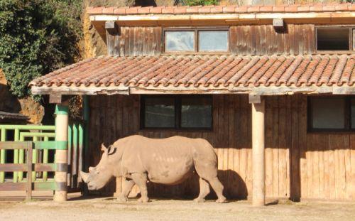 Rinocerontes - Cabárceno de cerca